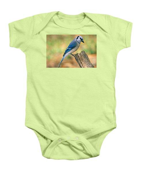 Blue Jay Baby Onesie by Millard H. Sharp