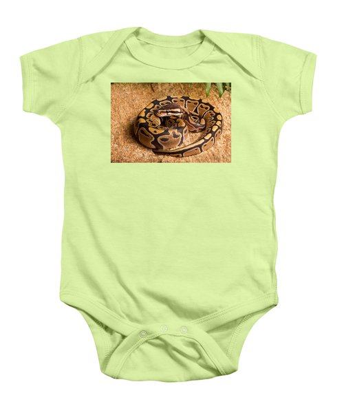 Ball Python Python Regius Coiled On Rock Baby Onesie by David Kenny