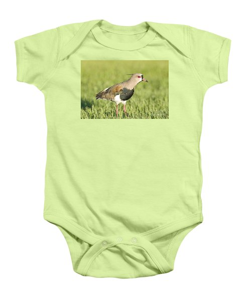 Southern Lapwing Baby Onesie