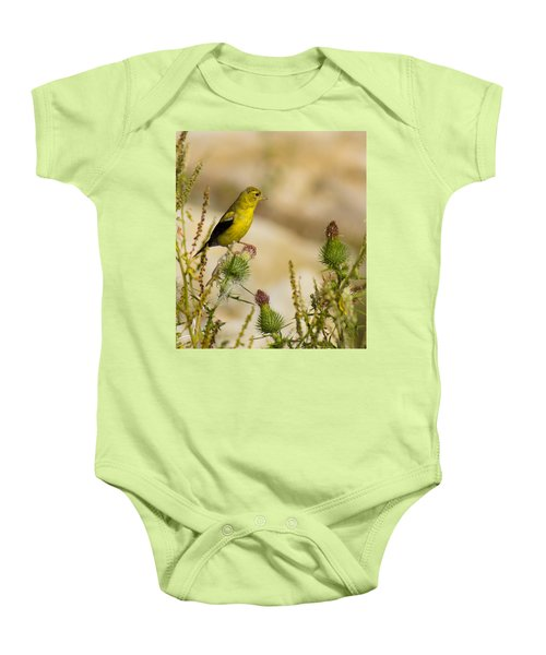 Goldfinch On Lookout Baby Onesie by Bill Pevlor