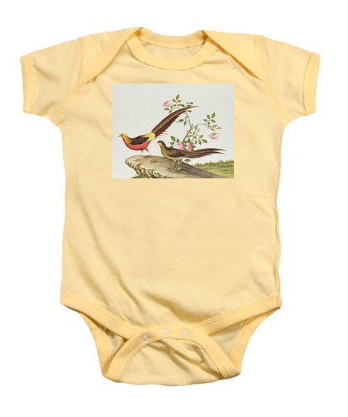 A Golden Pheasant Baby Onesie by Chinese School