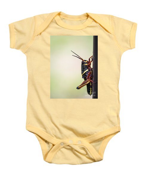 Giant Eastern Lubber Grasshopper Baby Onesie by Edward Fielding