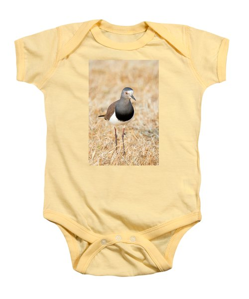 African Wattled Lapwing Vanellus Baby Onesie by Panoramic Images