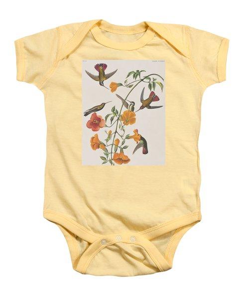 Mango Humming Bird Baby Onesie by John James Audubon