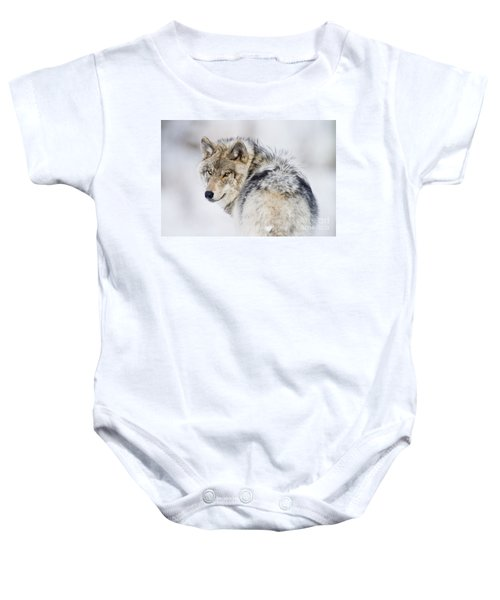 Timber Wolf Pictures Baby Onesie