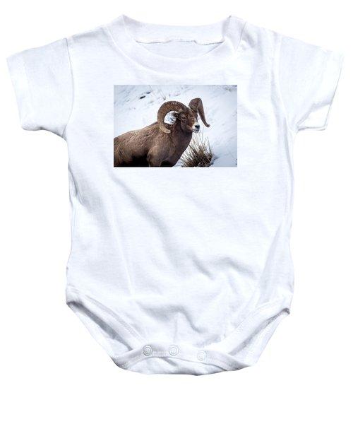 Bighorn Ram Baby Onesie