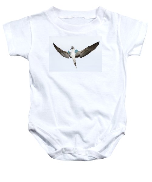 Blue-footed Booby Landing Galapagos Baby Onesie by Tui De Roy