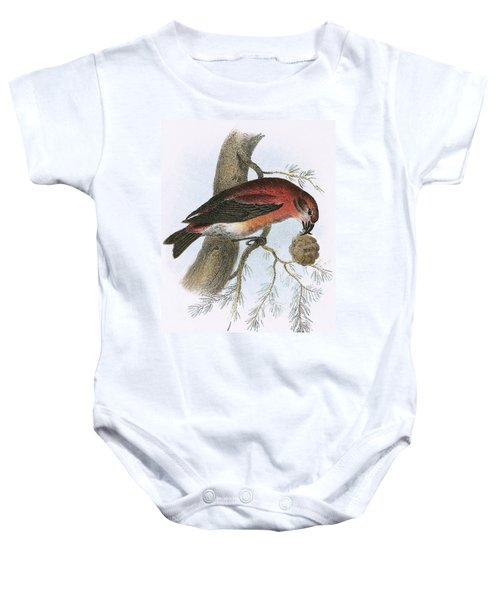 Crossbill Baby Onesie by English School