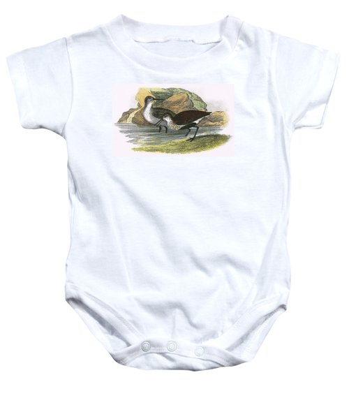 Dunlin Baby Onesie by English School