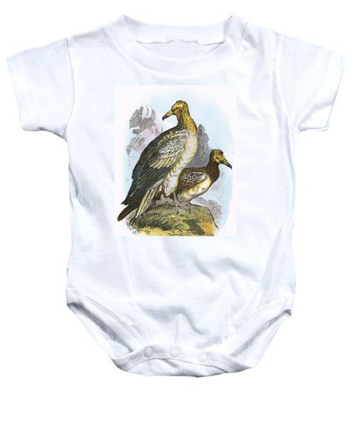 Egyptian Vulture Baby Onesie by English School
