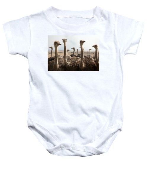 Ostrich Heads Baby Onesie by Johan Swanepoel