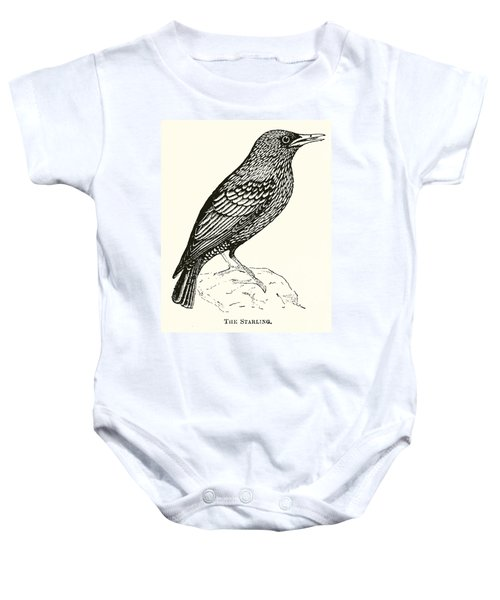 The Starling Baby Onesie by English School