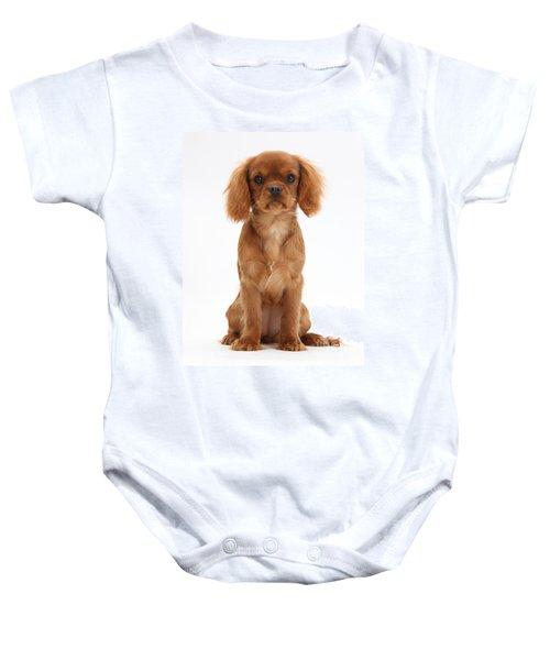 Cavalier King Charles Spaniel Puppy Baby Onesie