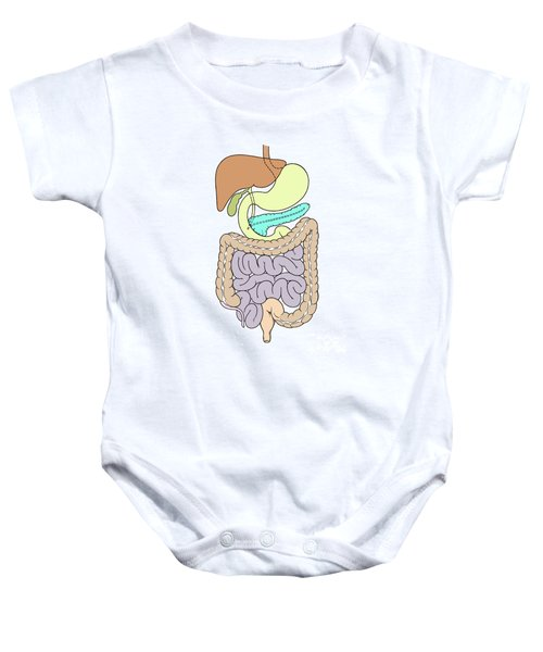 Illustration Of Abdomen Baby Onesie