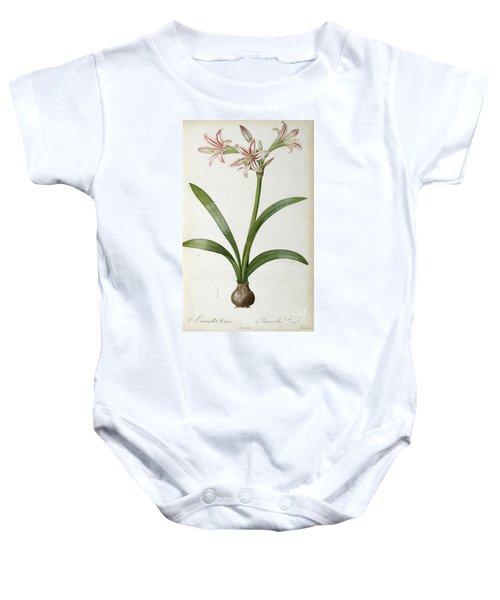 Amaryllis Vittata Baby Onesie