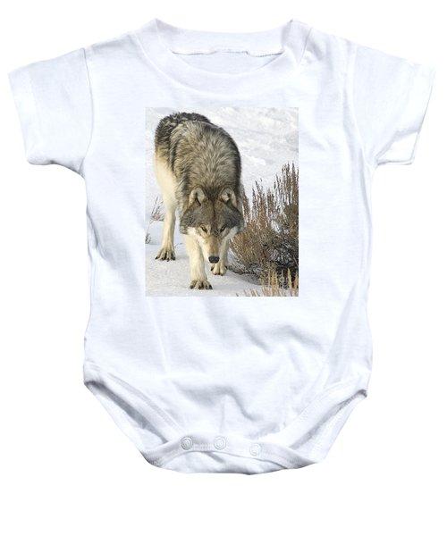 Gray Wolf Baby Onesie