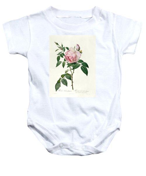 Rosa Chinensis And Rosa Gigantea Baby Onesie