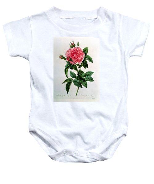 Rosa Gallica Regallis Baby Onesie