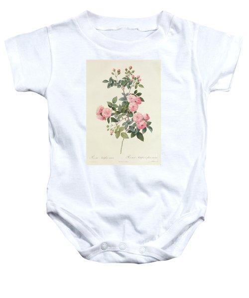 Rosa Multiflora Carnea Baby Onesie