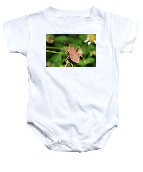 Leaf Footed Bug Baby Onesie