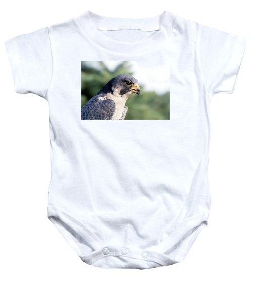 Peregrine Falcon Baby Onesie