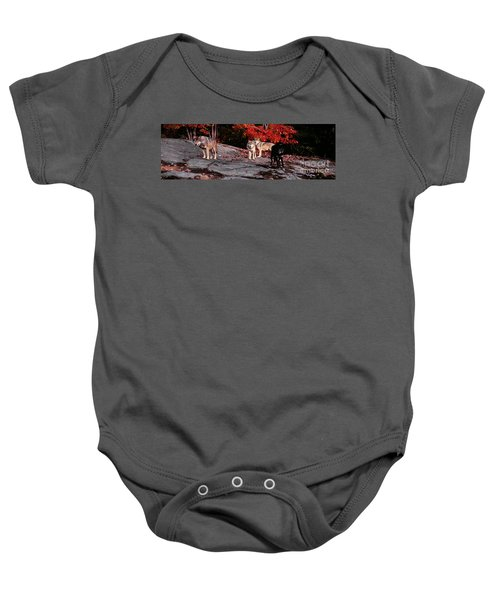Timber Wolves Under A Red Maple Tree - Pano Baby Onesie