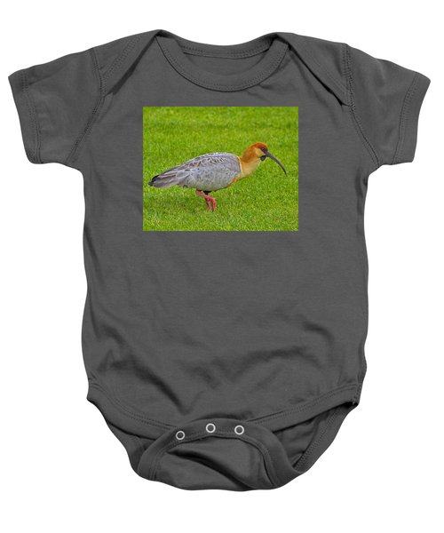 Black-faced Ibis Baby Onesie by Tony Beck