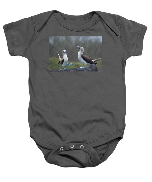 Blue-footed Booby Courtship Dance Baby Onesie by Tui De Roy