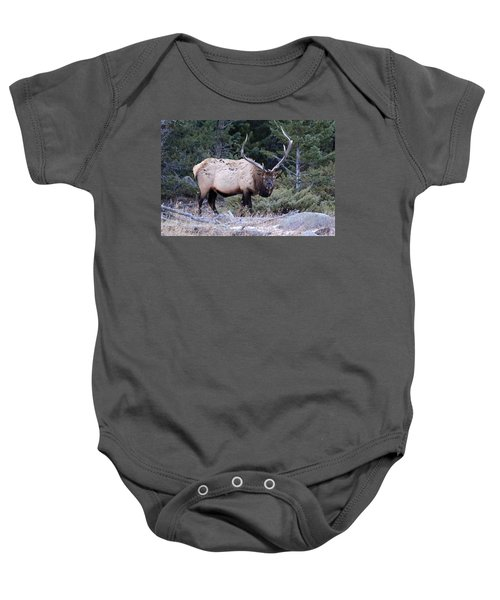 Colorado Bull Elk Baby Onesie