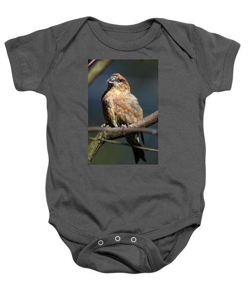 Crossbill Loxia Curvirostra Male Spain Baby Onesie