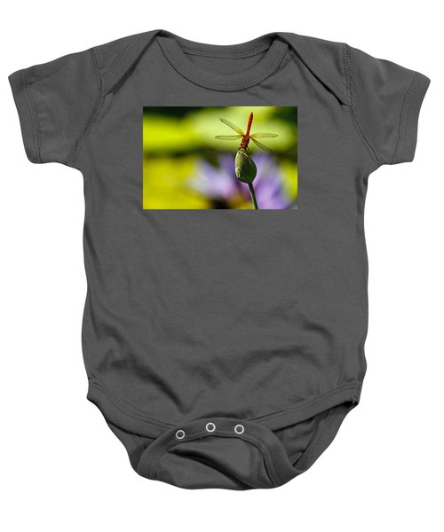 Dragonfly Display Baby Onesie