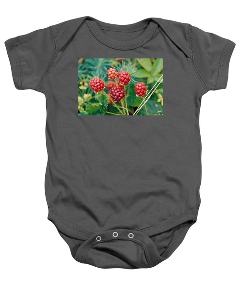 Highbush Blackberry Rubus Allegheniensis Grows Wild In Old Fields And At Roadsides Baby Onesie by Anonymous