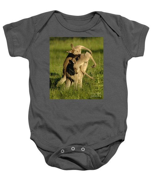 Kangaroos Taking A Bow Baby Onesie by Bob Christopher