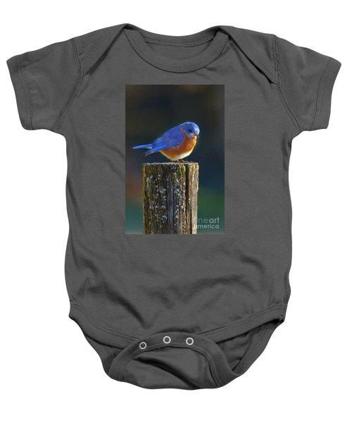 Male Bluebird Baby Onesie