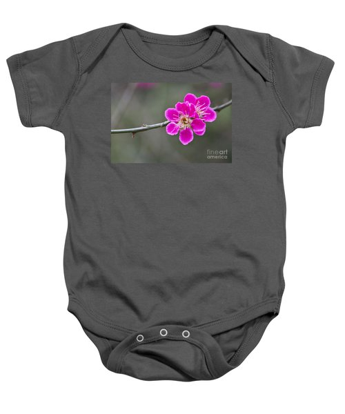 Baby Onesie featuring the photograph Japanese Flowering Apricot. by Clare Bambers