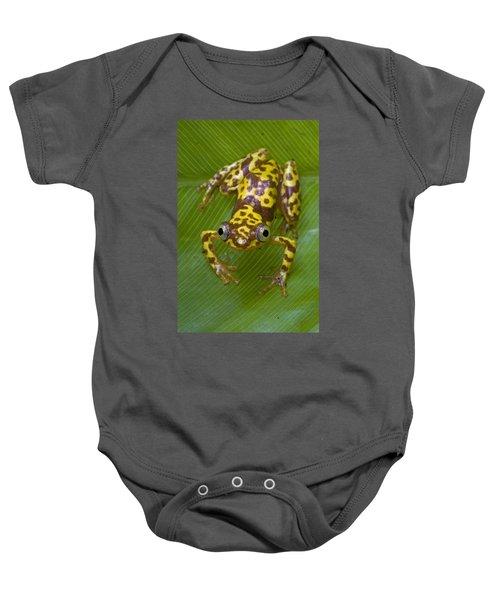 Pygmy Leaffolding Frog Ghana Baby Onesie
