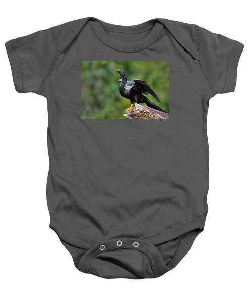 Anhinga Anhinga Anhinga Perching Baby Onesie by Panoramic Images