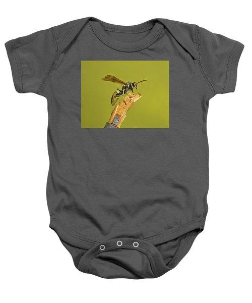 European Paper Wasp Baby Onesie