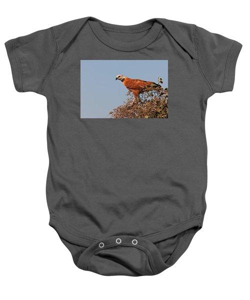 Black-collared Hawk, Pantanal Baby Onesie