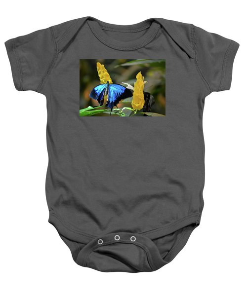 Blue Beauty Butterfly Baby Onesie