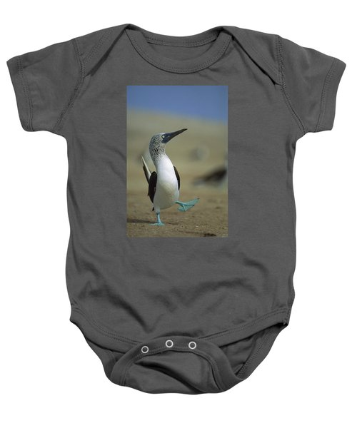 Blue-footed Booby Sula Nebouxii Baby Onesie by Tui De Roy