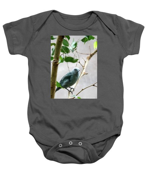 Blue-grey Tanager 2 Baby Onesie