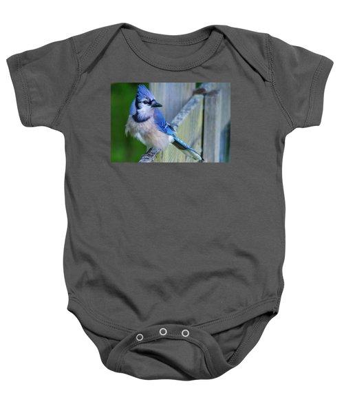 Blue Jay Fluffed Baby Onesie