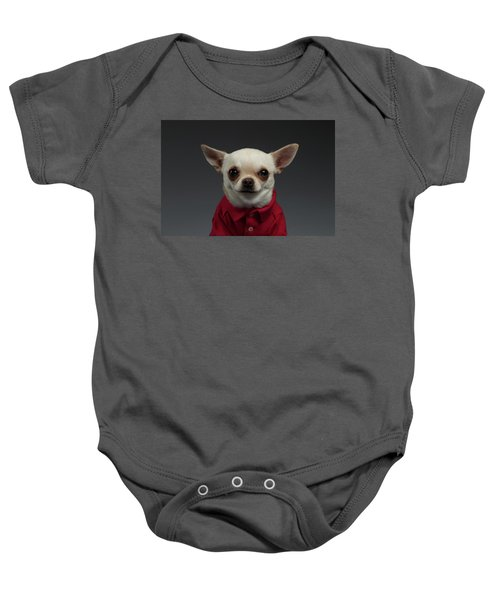 Closeup Portrait Chihuahua Dog In Stylish Clothes. Gray Background Baby Onesie