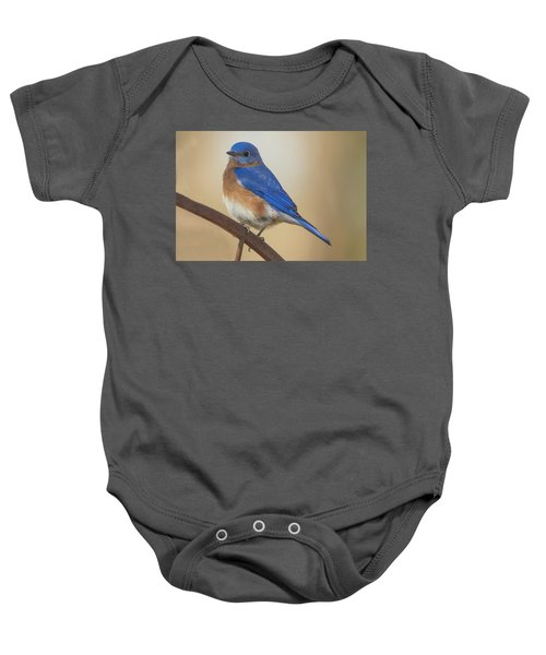 Eastern Blue Bird Male Baby Onesie