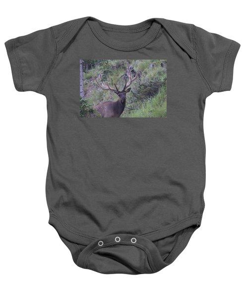 Bull Elk Rmnp Co Baby Onesie