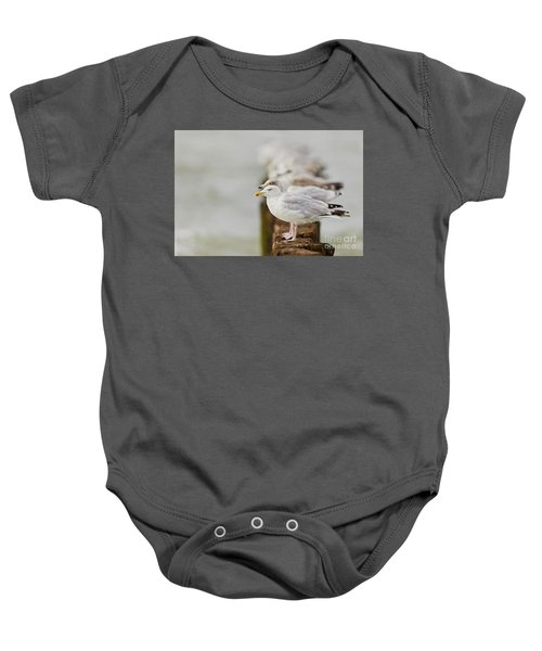 European Herring Gulls In A Row Fading In The Background Baby Onesie