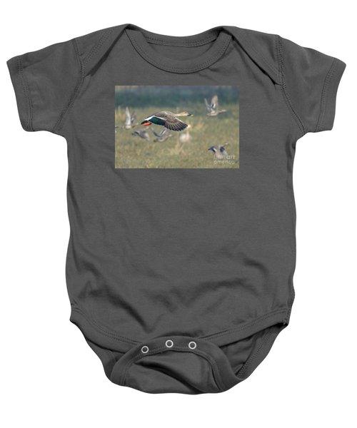 Indian Spot-billed Duck 01 Baby Onesie