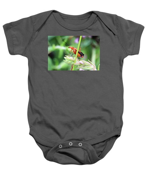 Insect Baby Onesie