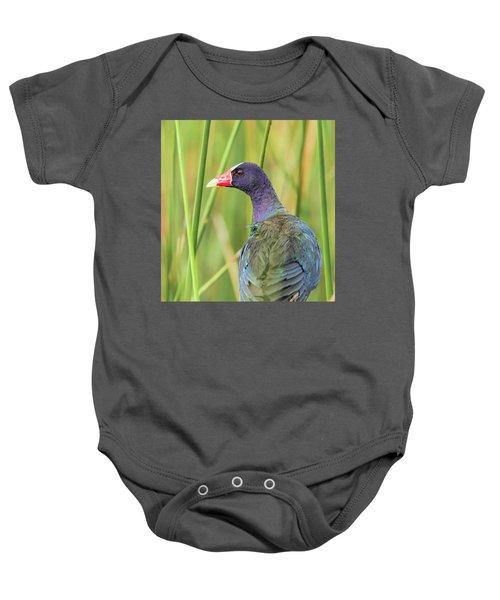 Purple Gallinule Baby Onesie